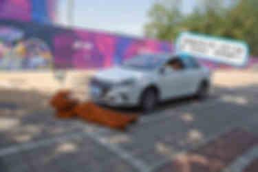 电动汽车撞了狗怎么办