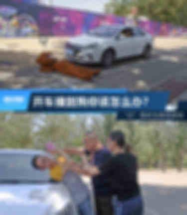 电动汽车撞了狗你该怎么办