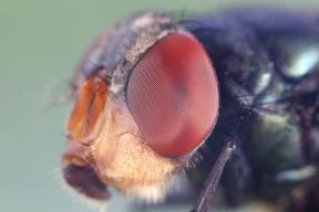 昆虫的复眼可以用于自动驾驶?中国科学家的脑洞真大